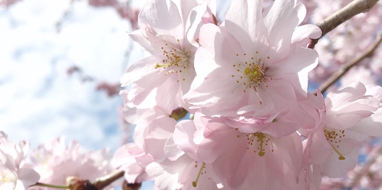 radosti, jaro