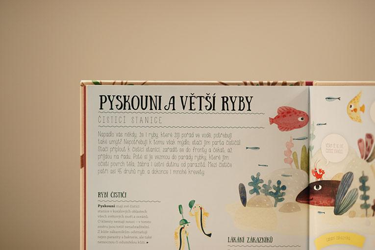 Nečekaná přátelství, Pavla Hanáčková, dětské knihy, Co má klokan ve vaku